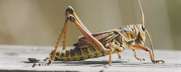 What's the scariest creature of all? Crickets.